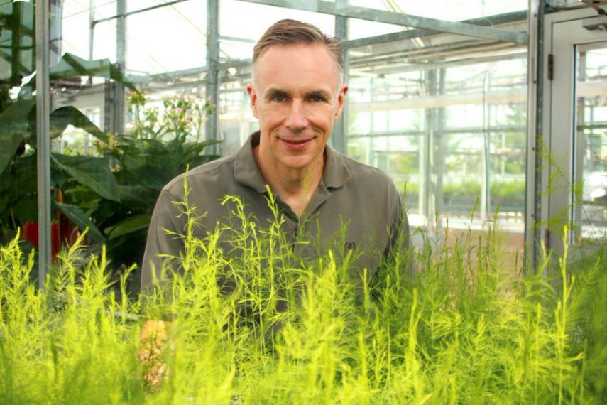 Dave Wolyn pictured with young asparagus sprouts.