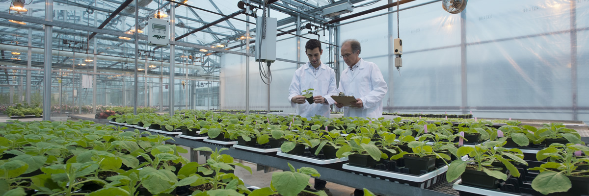 Technology Transfer - Research picking plant with tweezers
