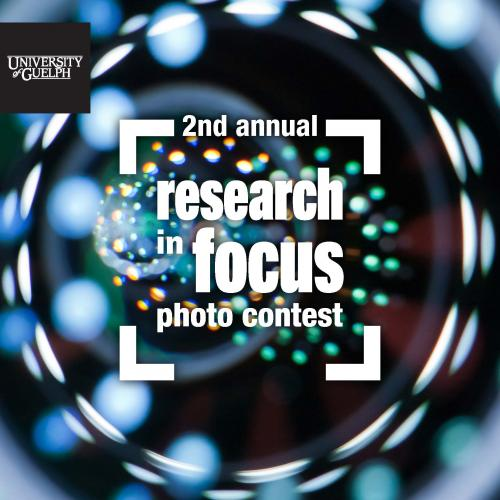 Photo of the 2nd annual Research in Focus photo contest Icon