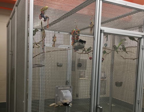 A metal aviary holding several birds and sticks