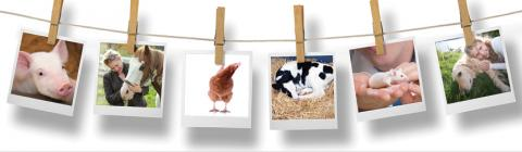 image depicting polaroid photos of animals, hanging on a line
