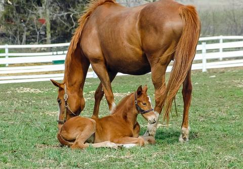 Photo of a horse with her foal