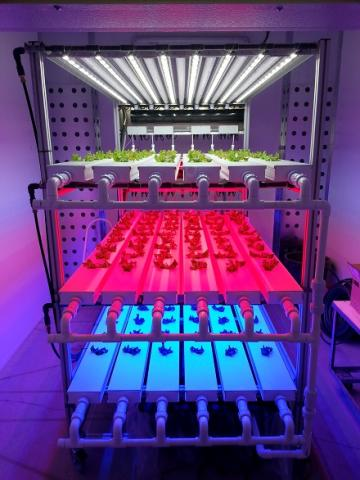 Photo of a shelving unit with plants on it.  Each shelf is bathed in a different colour of light - the top is white, the middle is red and the bottom is blue.