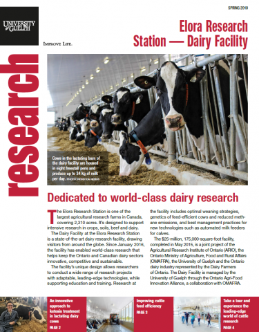 Cover of this publication - Photo of cows in in the lactating barn looking at the camera with text below.