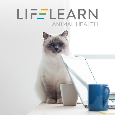 Image of a white cat sitting on a desk by a laptop with the LifeLearn logo at the top of the page