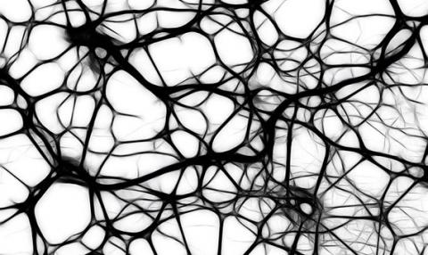 Photo of a neural network