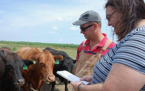 Technician Tim Caldwell and Prof. Katie Wood stand with three cattle who have green tags on their ears.  Prof. Wood is holding a notebook, which she is looking at.