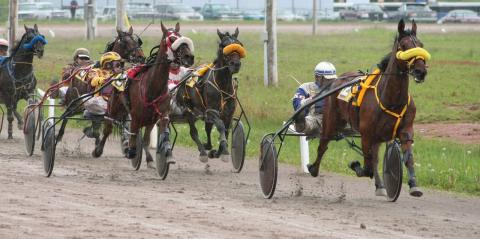 Horses on a race track.