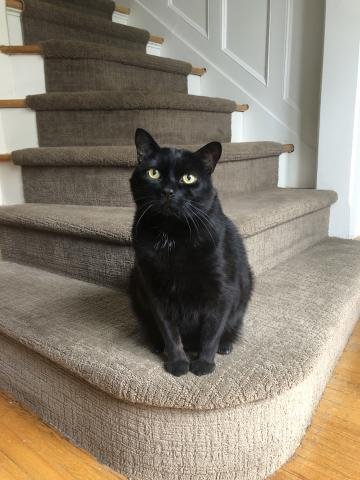 A black cat sitting on stairs.