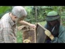 Beekeeping extension in Vietnam thumbnail