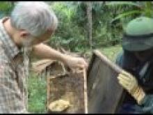 Beekeeping extension project in rural Vietnam thumbnail