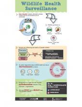 infographic about wildlife health surveillance