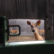 Through the Barn door photograph by Ellie Milnes